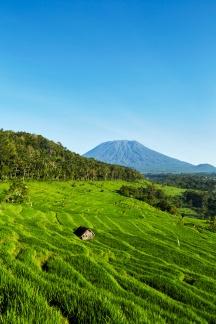 ricefields mount agung 2.tif