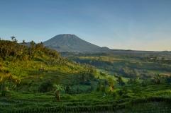 ricefields mount agung 3.tif
