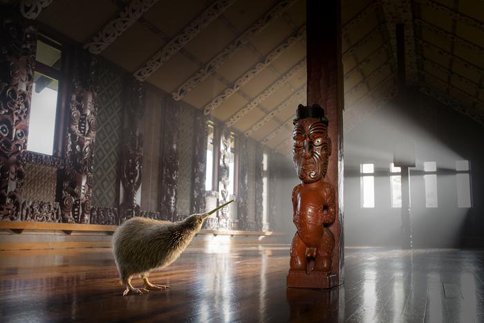 pete maori.jpg